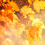 Осень — не время для грусти