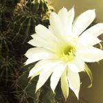 Сказка «Цветок кактуса»